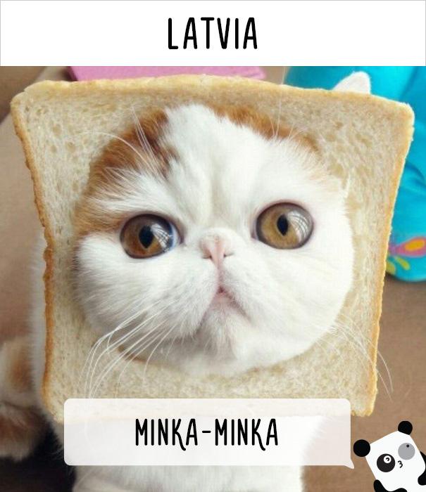 llamados-gatos-letonia