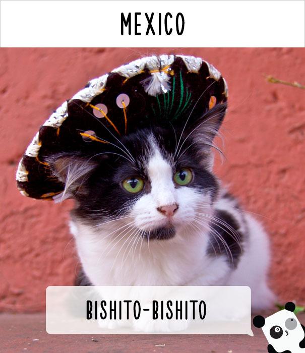 llamados-gatos-mexico