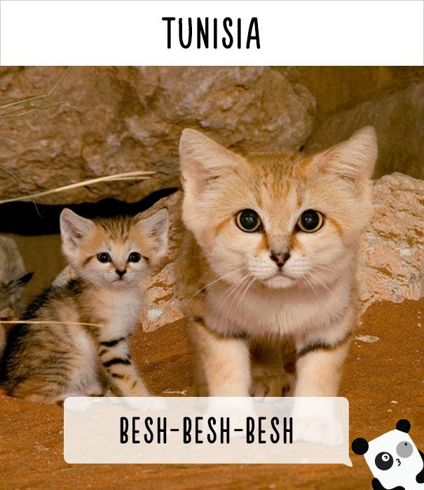 llamados-gatos-tunez