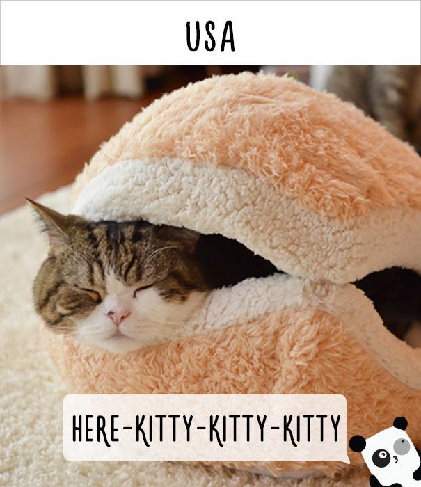 llamados-gatos-usa