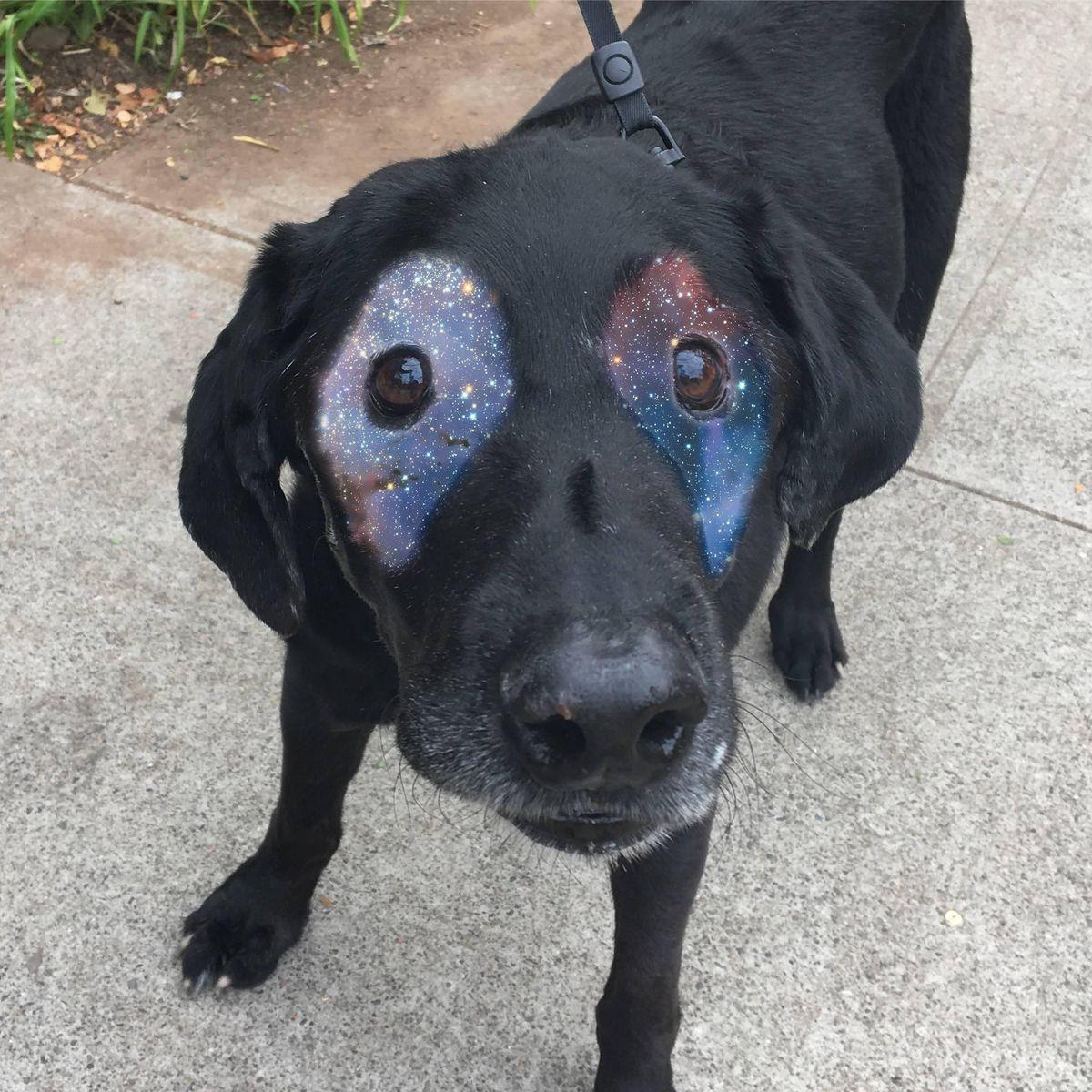 perro-labrador-photoshop10