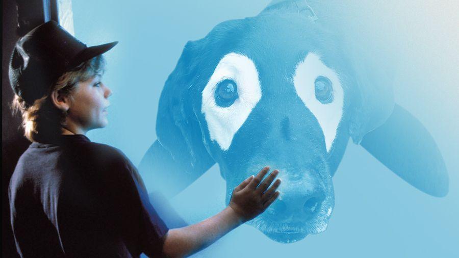 perro-labrador-photoshop11