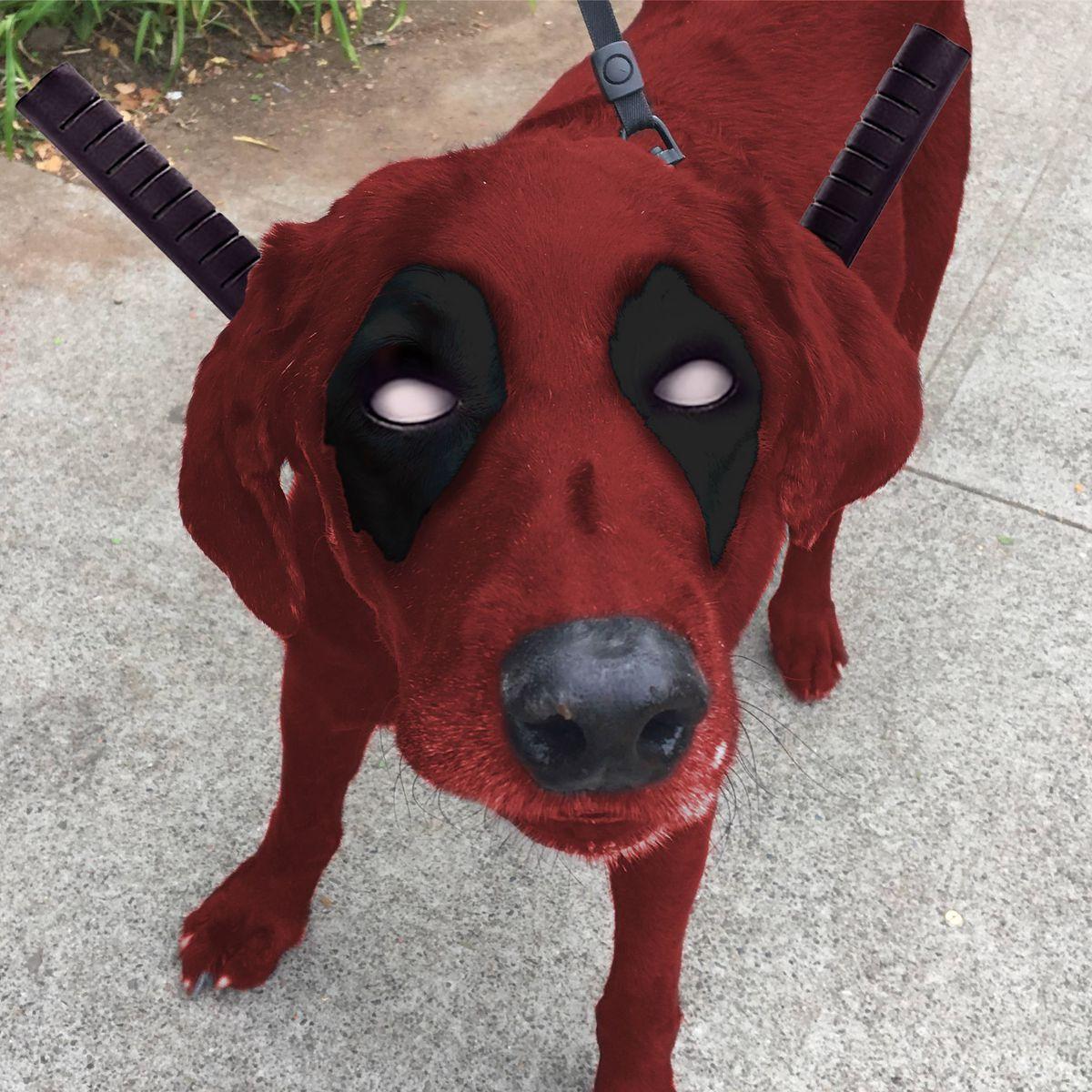 perro-labrador-photoshop2