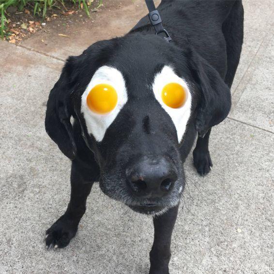 perro-labrador-photoshop6