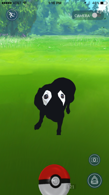 perro-labrador-photoshop7