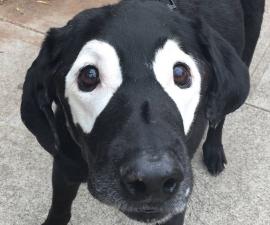 perro-photoshop-destacada