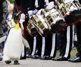 pinguino-general-de-brigada-destacada