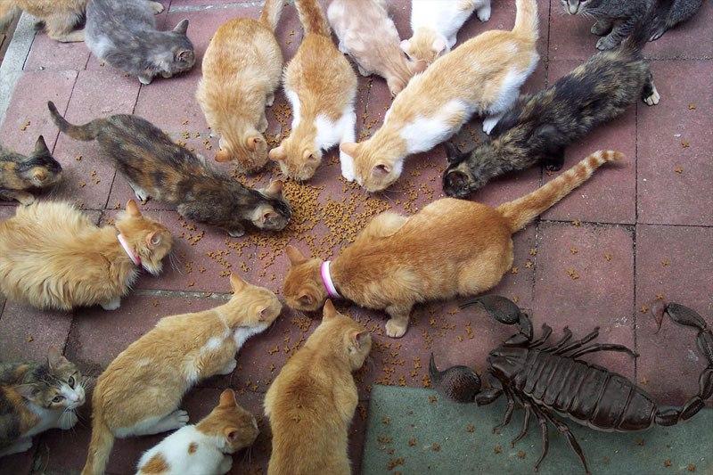 escorpion-gato