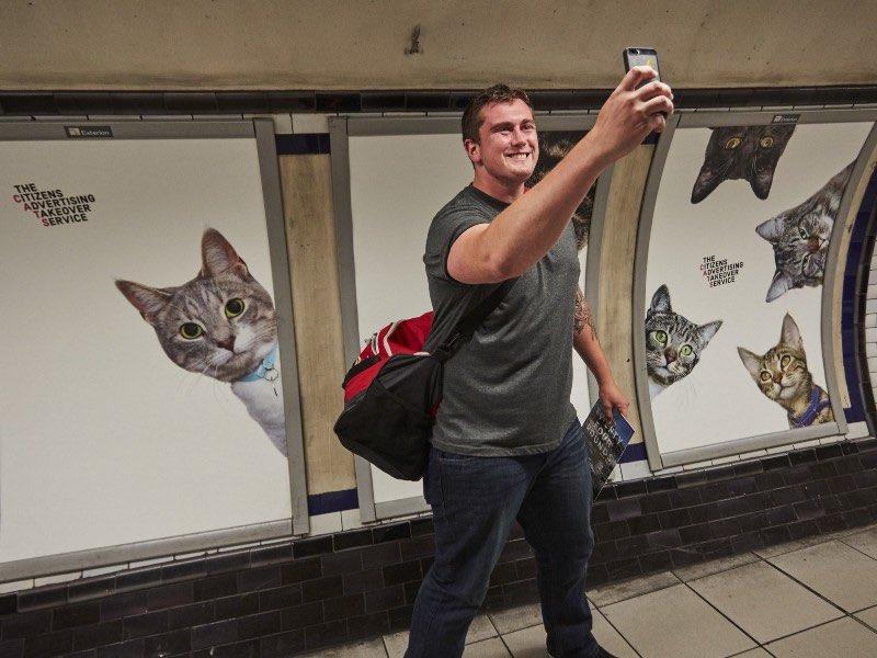gatos-publicidad-3