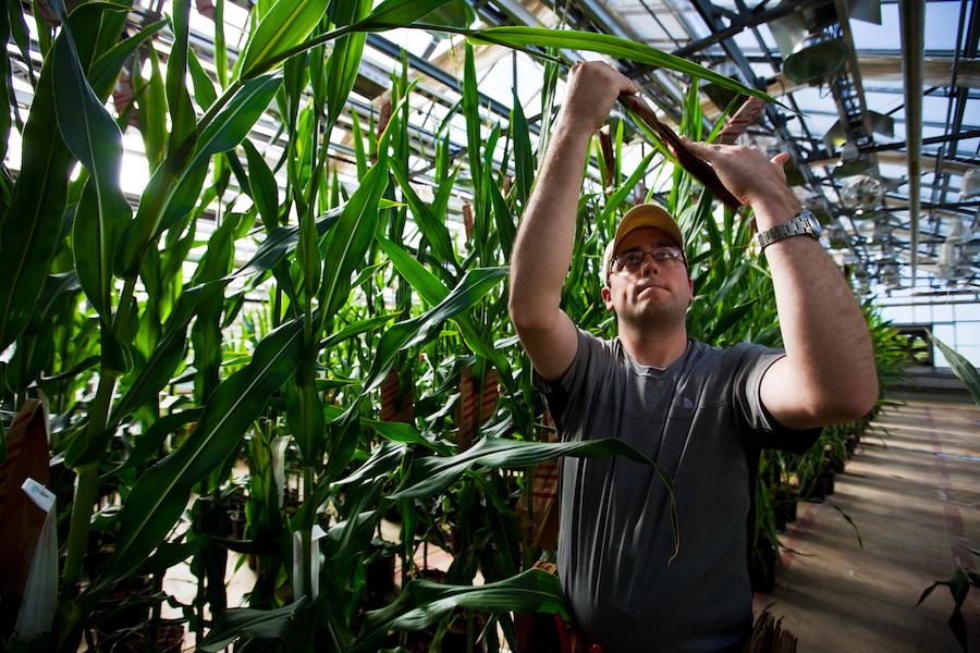 Asociaciones ambientalistas y agricultores se han declarado en contra de Monsanto