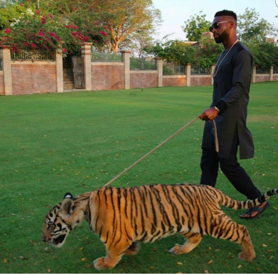 Millonario con tigre en Dubai