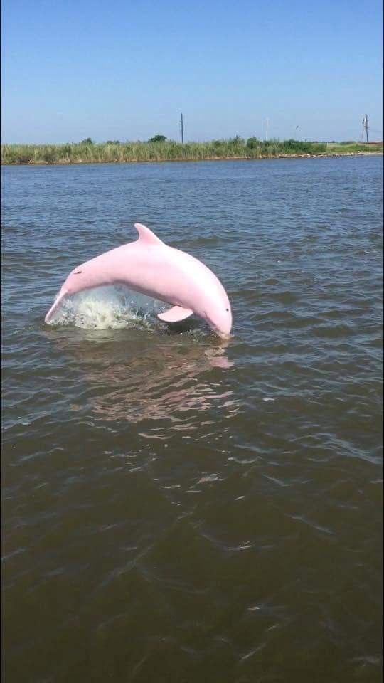 Pinkie - Delfín rosa