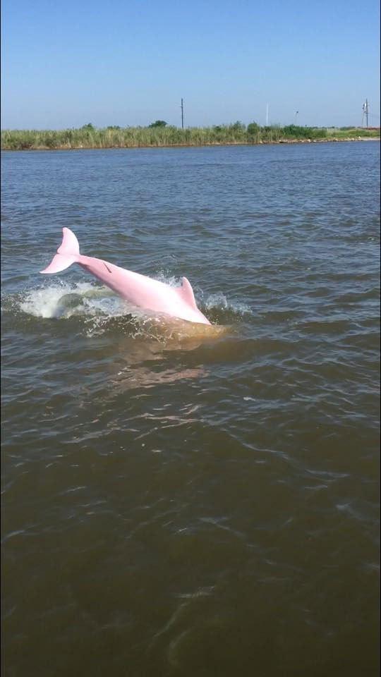 Pinkie - Delfín rosado