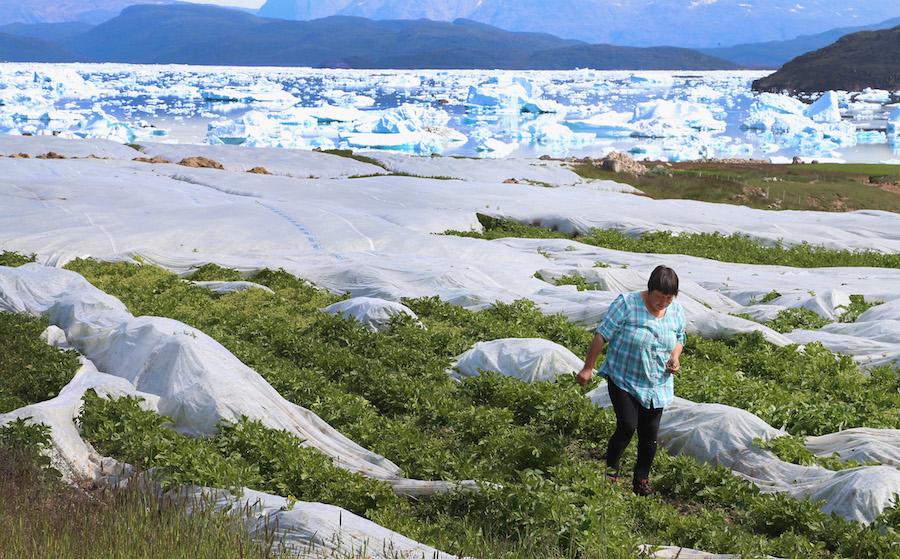 Por el cambio climático, Groenlandia estaría cerca de desaparecer como la conocemos; sus glaciares están desapareciendo desde abajo