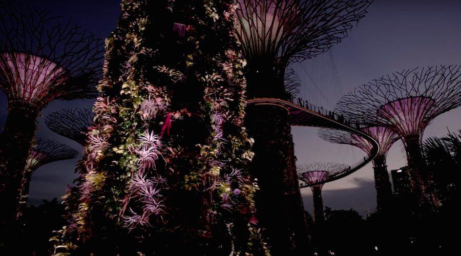 Planet Earth - Flora