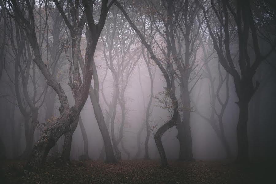 Bosque de Transilvania