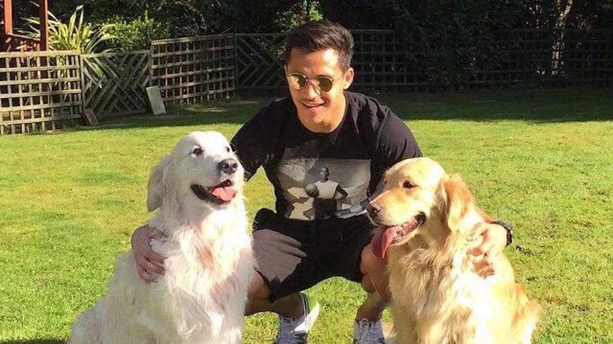Atom y Humber: los perros de Alexis Sánchez son la nueva sensación del Arsenal