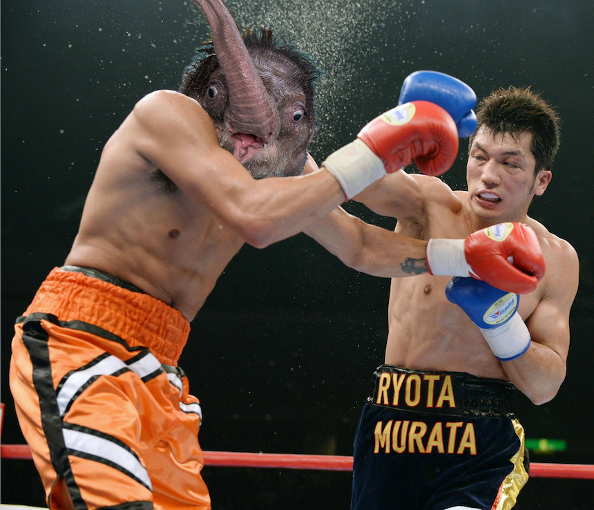 Elefante bebé - Knockout