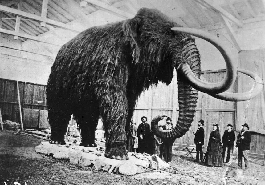 Réplica de un mamut