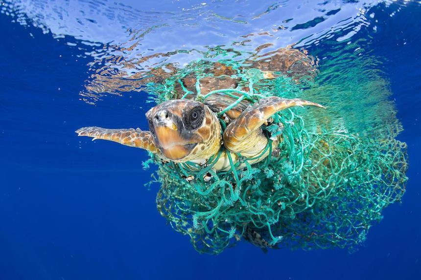 World Press Photo - Tortuga marina