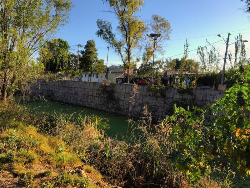 Lirios Canal Nacional