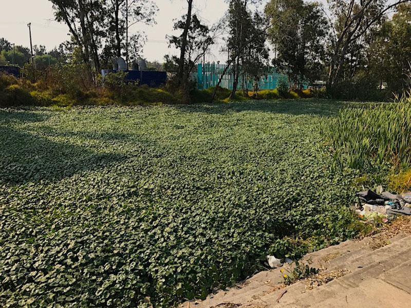Plantas Verdes Canal Nacional