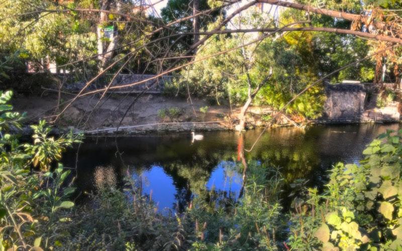 Canal Nacional Mexico