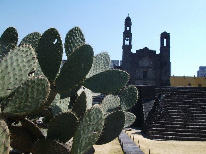 Foto de Tlatelolco con nopal en primer plano.