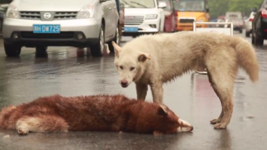 El perrito que sufrió al perder a su amigo