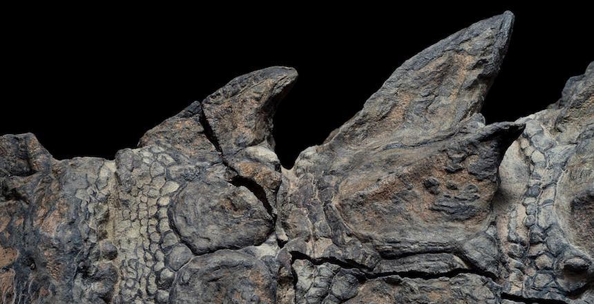 Fósil perfectamente preservdo