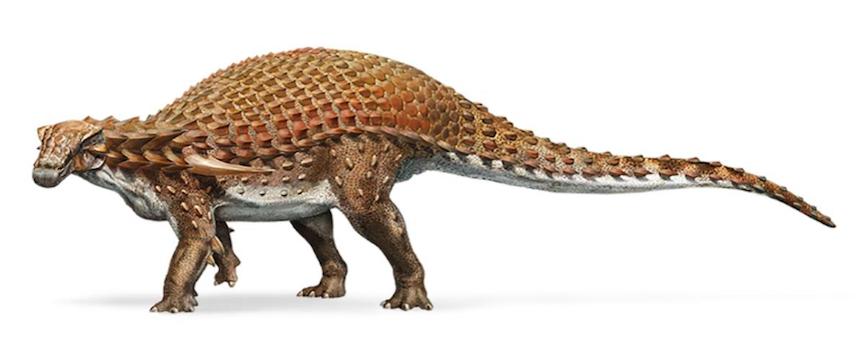 Ankylosaurio - Versión basada en el fósil