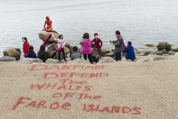 """""""Dinamarca, defiende a las ballenas de las Islas Feroe"""""""