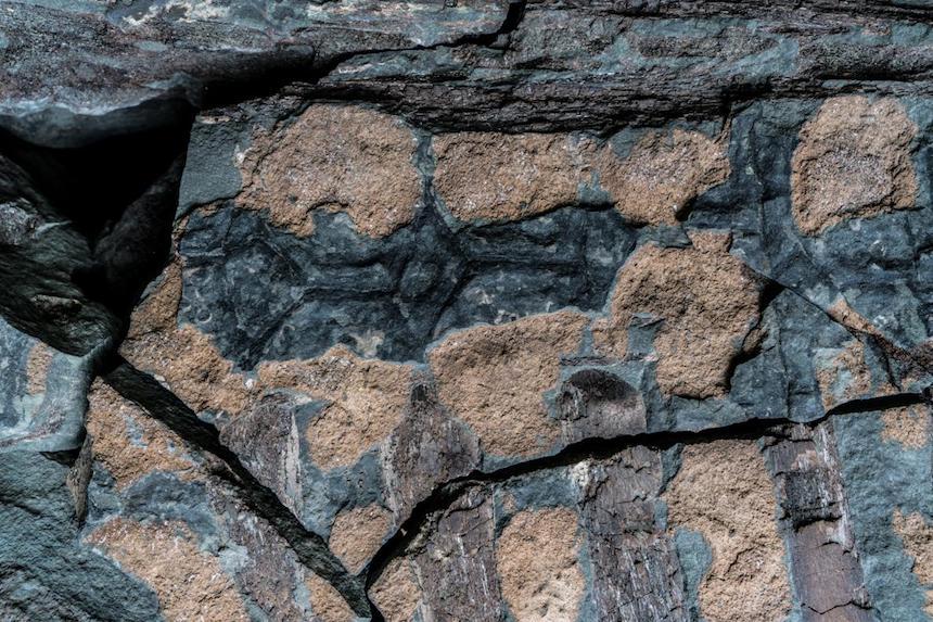 Piel del ankylosaurio - Fósil