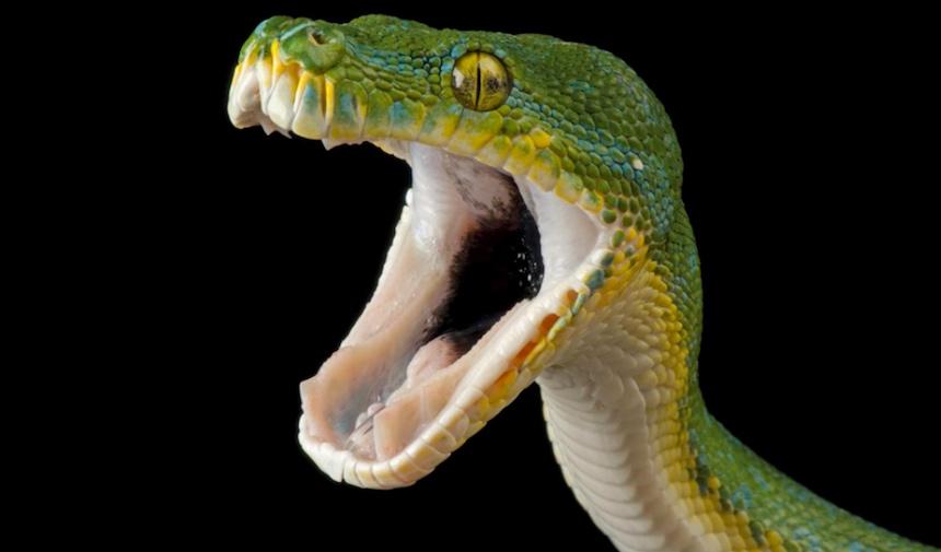 Animales en extinción - Serpiente