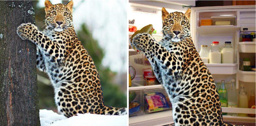 Jaguar - Photoshop