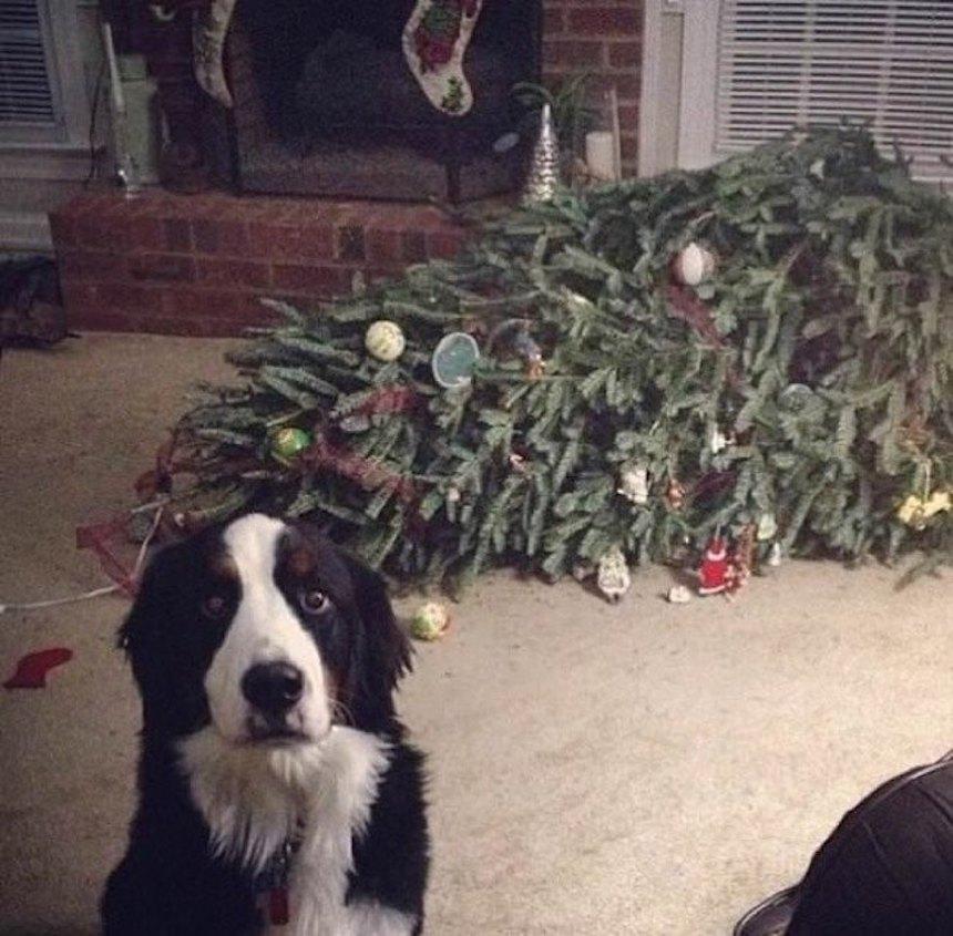 Perrito - Árbol de Navidad