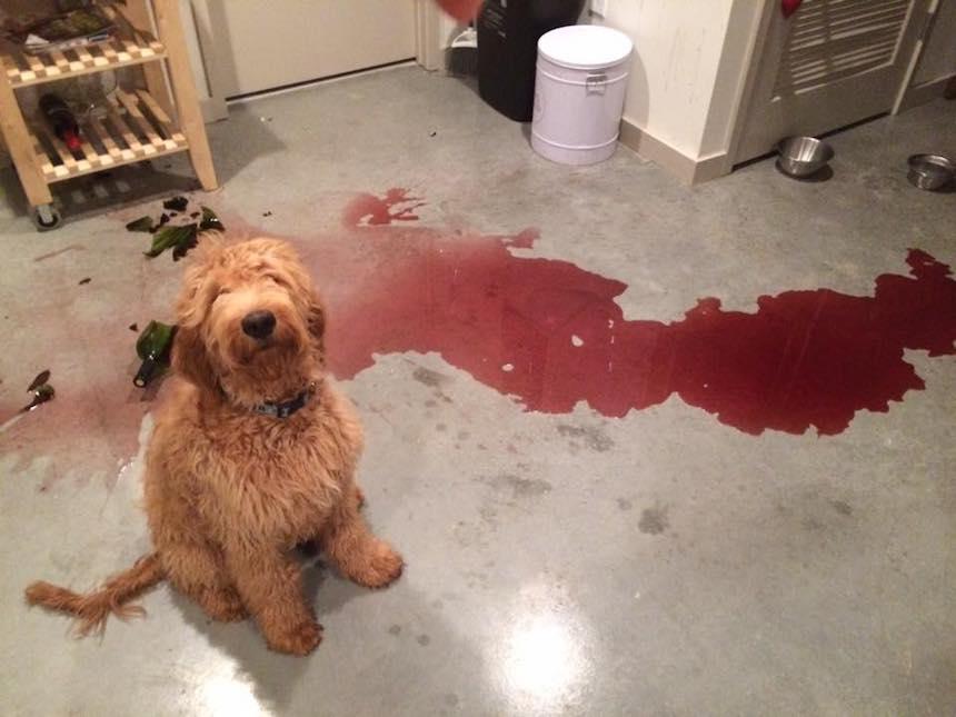 Perrito - Vino