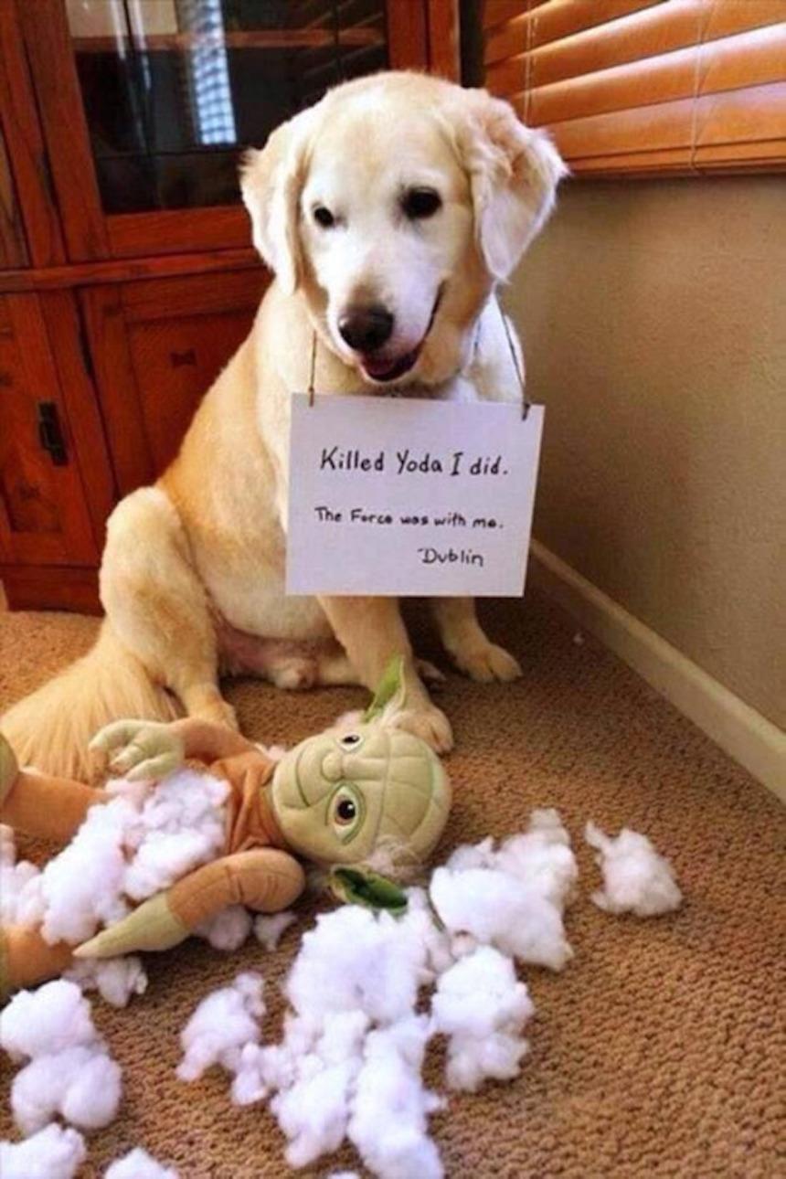 Perrito mata a Yoda