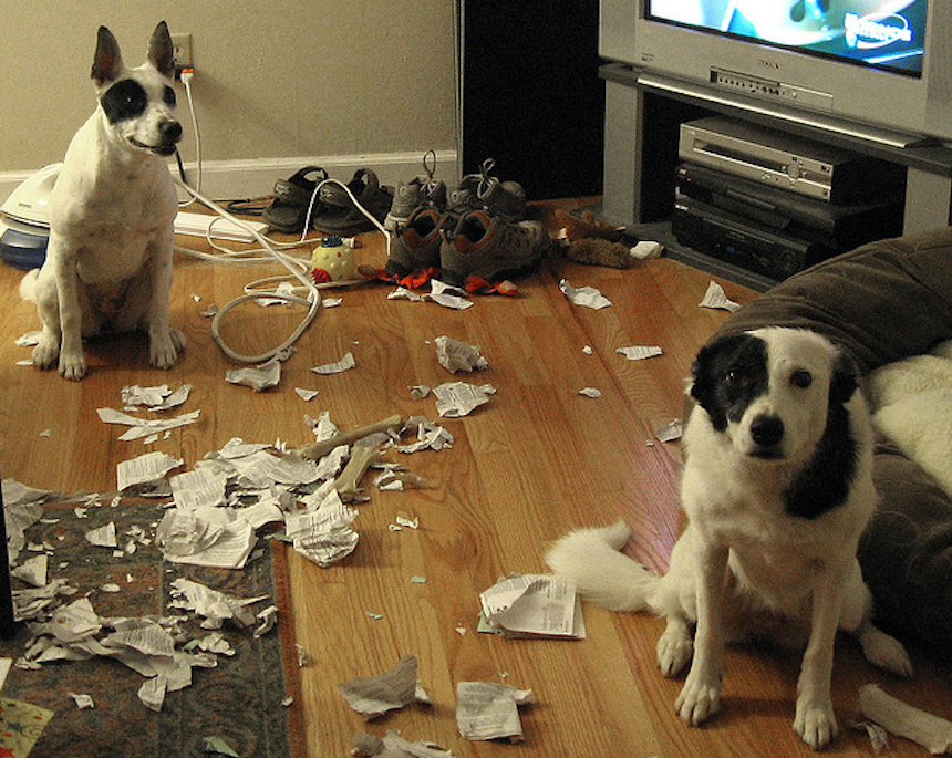 Perritos destructores