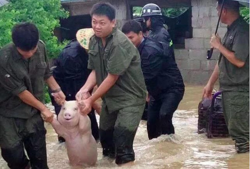 Cerdo de Photoshop - Original