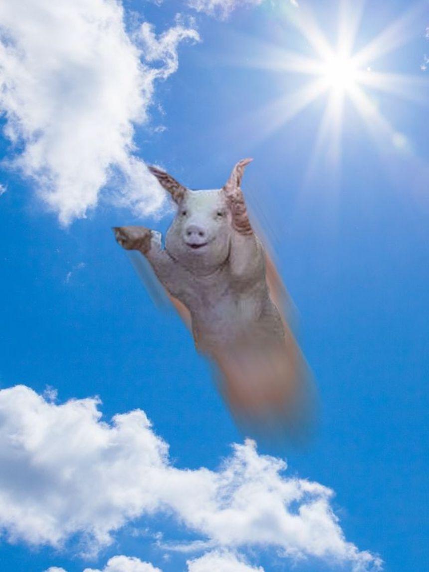 Cerdo de Photoshop - Volando