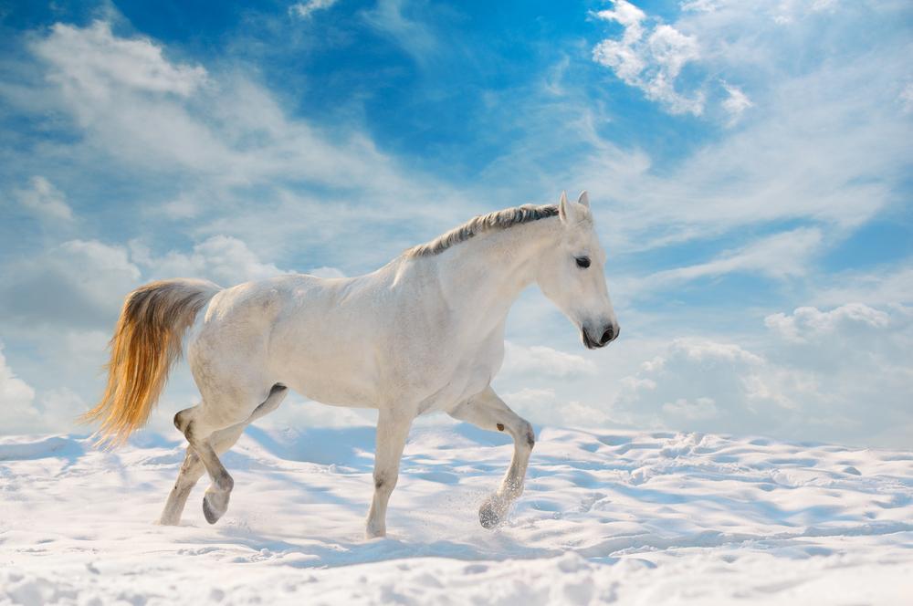 Caballo blanco con el cielo de fondo