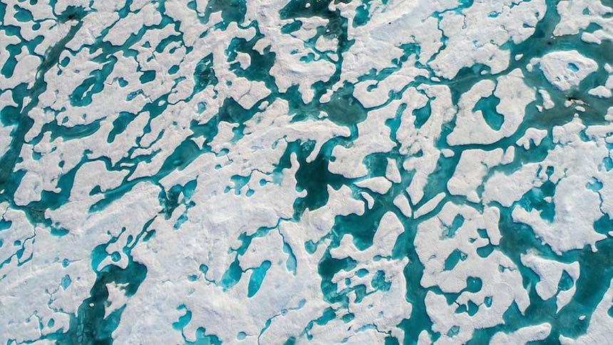 Oso polar - Vista desde arriba