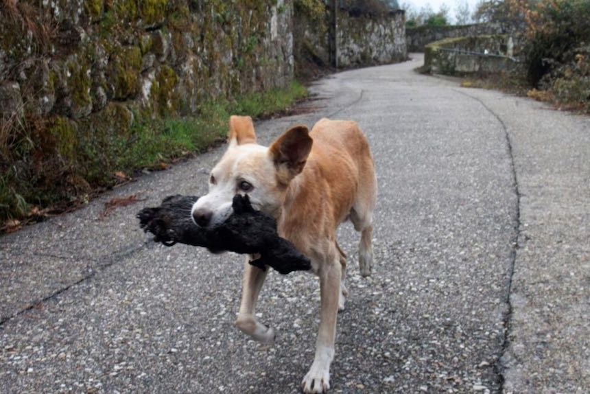Galicia - Una perrita sostiene a su cría calcinada