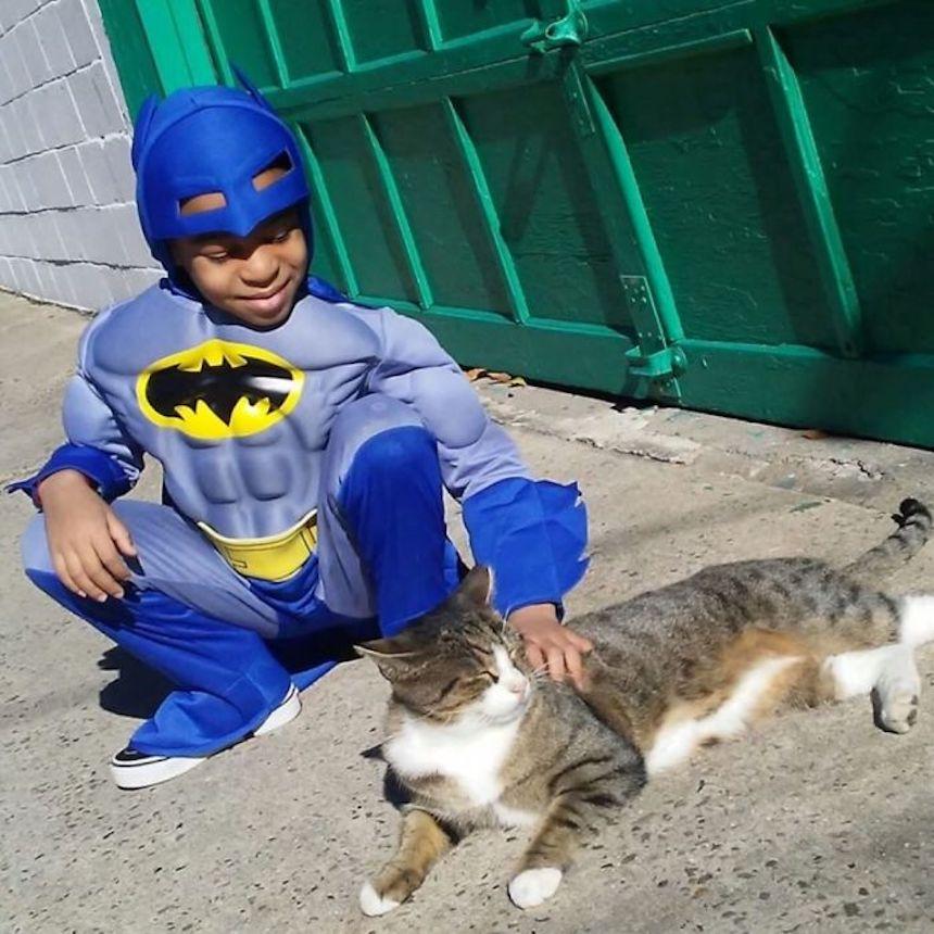 Shon y los gatitos - Batman