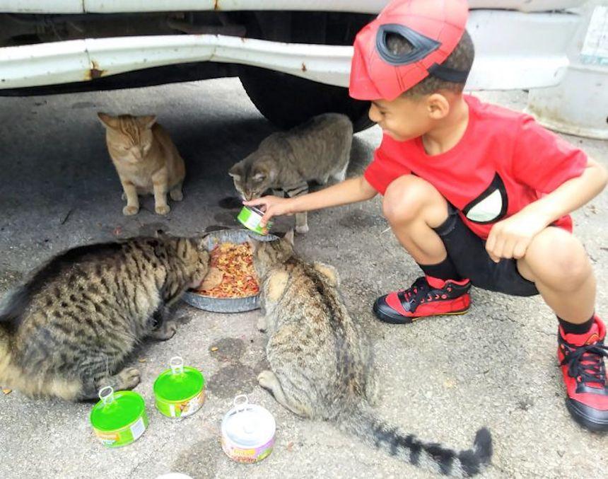 Shon y los gatitos - Alimentando gatitos