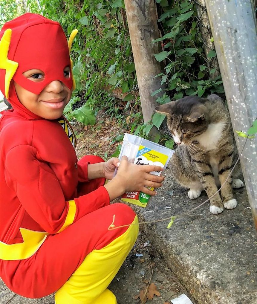 Shon y los gatitos - Flash