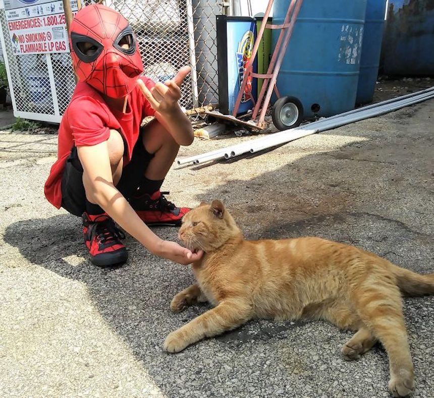 Shon y los gatitos - Spider-Man y los gatitos