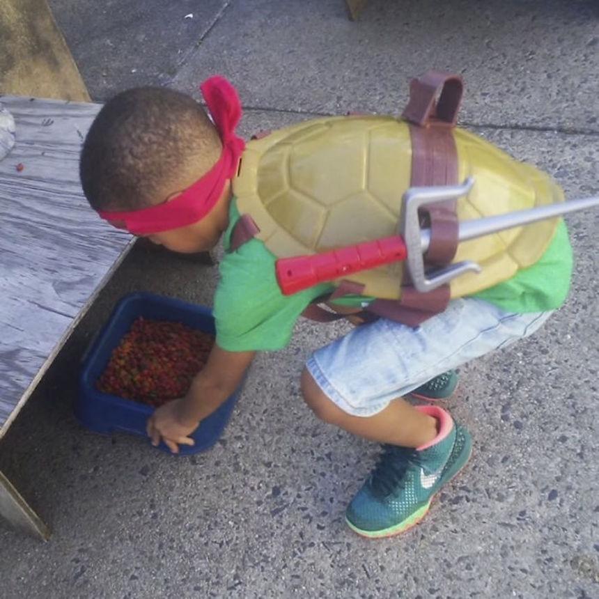 Shon y los gatitos - Tortuga Ninja