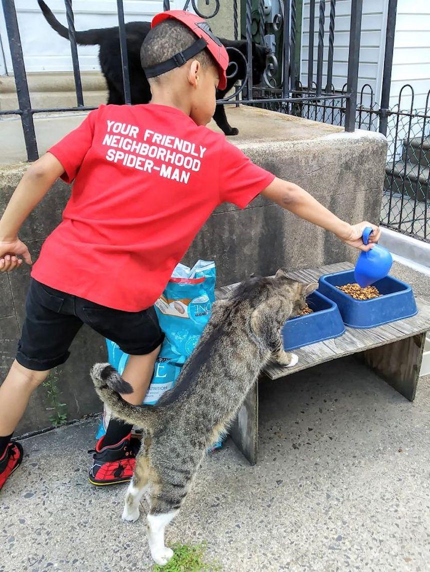 Shon y los gatitos - Spider-Man alimentando gatitos